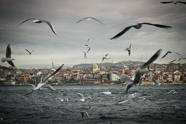 Even the seagulls are majestic! | 42 Ways Istanbul Is So Beautiful It Actually Hurts