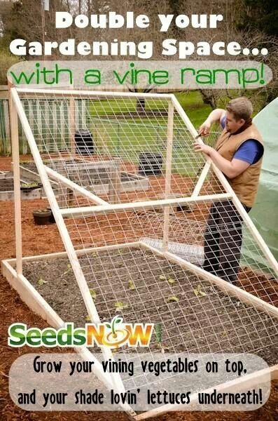 Growing veggies vertically.