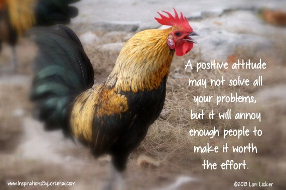 Famous Quotes About Chickens: Annoying Rooster Quotes And Sayings. QuotesGram