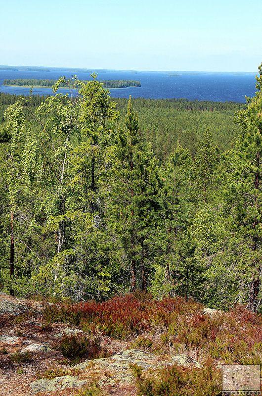 Pyhävuorelta upeat näkymät Lappajärven ulapalle - Vimpeli © Marjut Hakkola, 2014