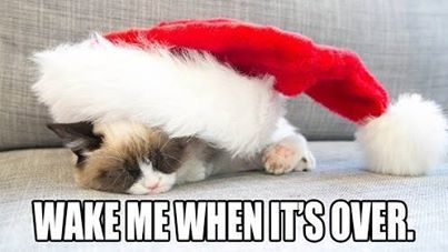 Christmas preparations becoming a bit too much? Take a break and relax by watching the kitty-cam! http://www.spca.bc.ca/multimedia/kitty-cam.html