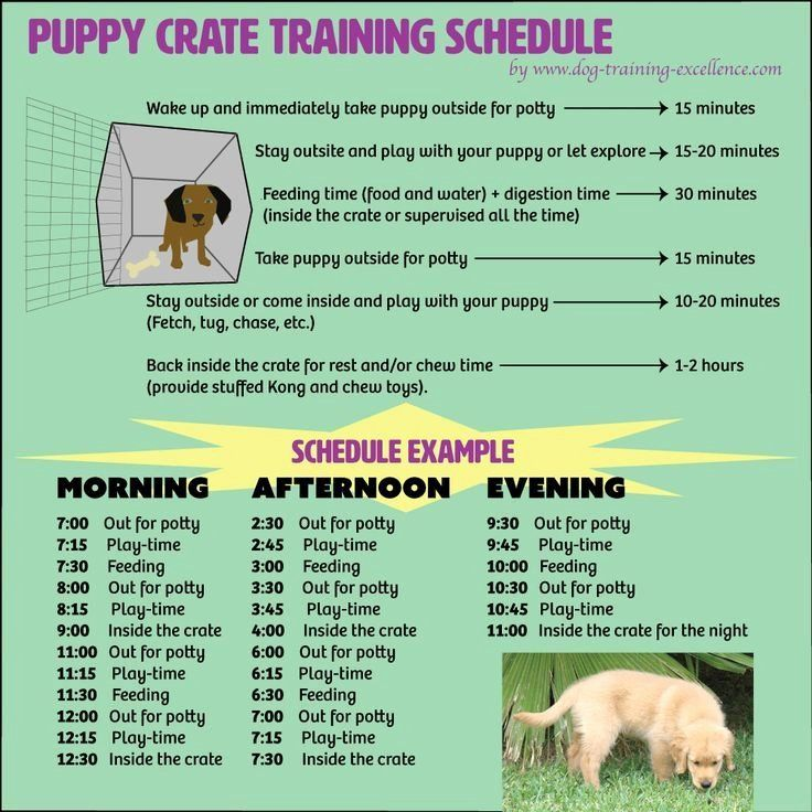 Dog Training Plan Template Fresh Free Printable Puppy Crate Training Schedule The Be Crate Training Puppy Crate Training Puppy Schedule Puppy Training Schedule