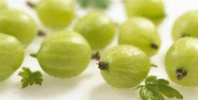Benefits of Amla Berry