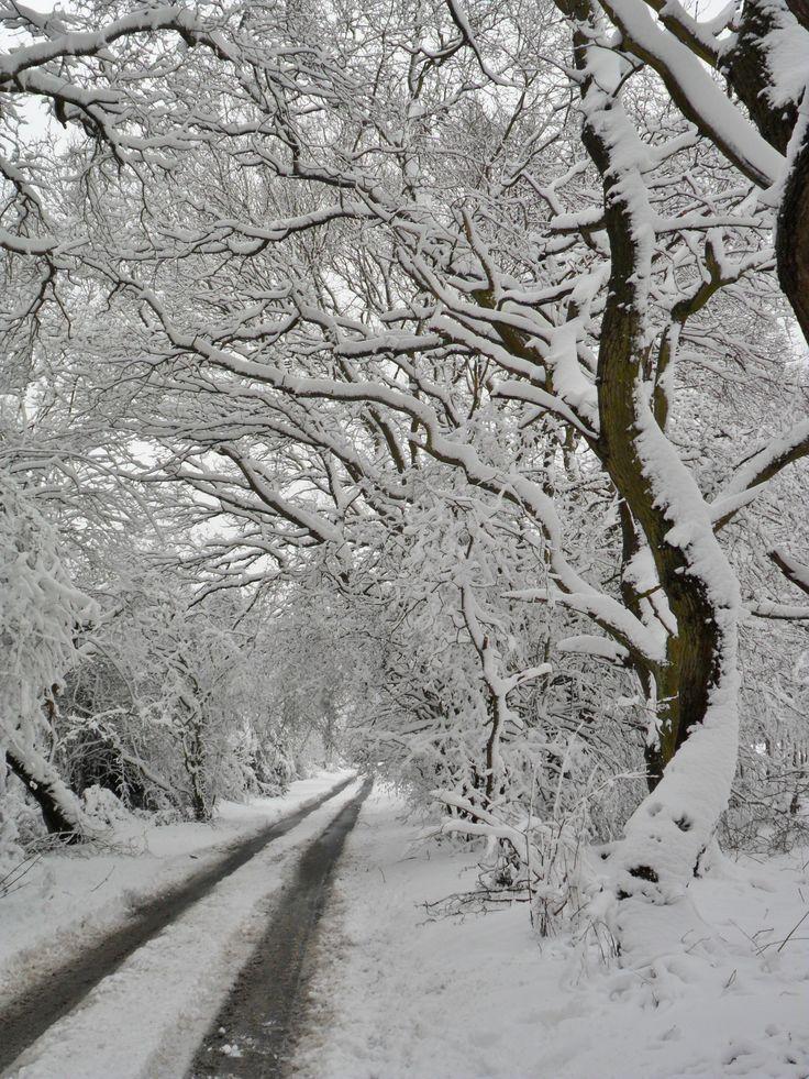 "vwcampervan-aldridge: ""Thick snow on the trees at Hobs Hole Lane, Aldridge,Walsall, England All Original Photography by http://vwcampervan-aldridge.tumblr.com """
