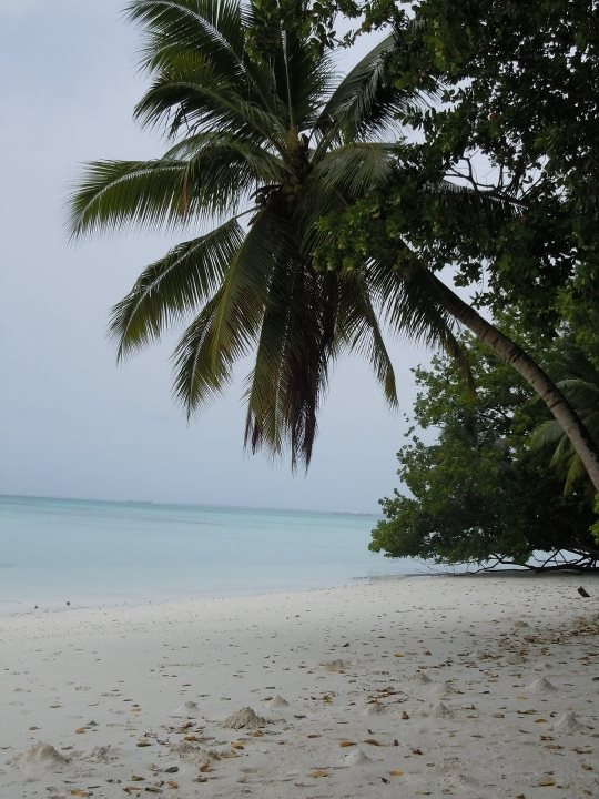 Diego Garcia, Banyan Cemetary Beach 2011 - I loved going to this place in 2007.