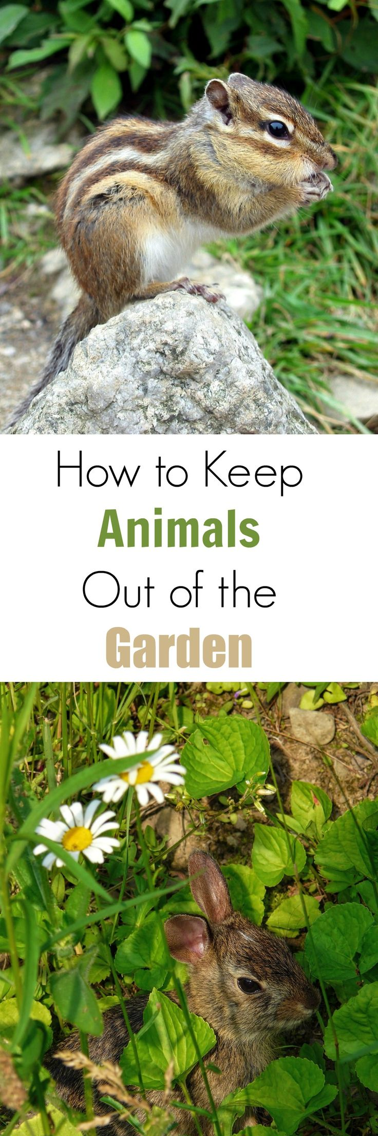 Beautiful Garden Ideas To Keep Animals Out Boards For The Base