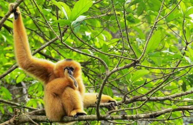 Erkundigen Cuc Phuong Nationalpark- #AsiaticaReisen