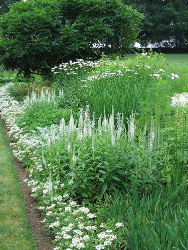 113 best A White Garden images on Pinterest | White gardens ...