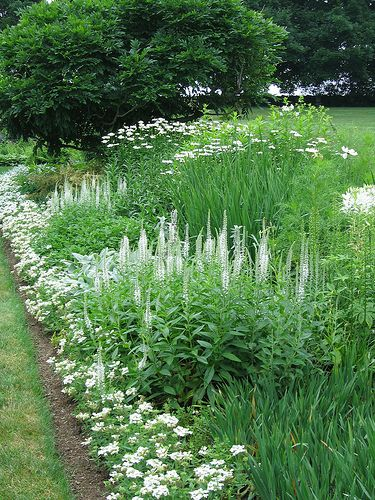 161 best white garden images on pinterest white gardens gardening the moon garden at white flower farm mightylinksfo Gallery