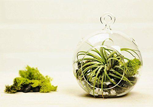 Hanging Air Plant Terrarium DIY Kit by MakersKit Inc