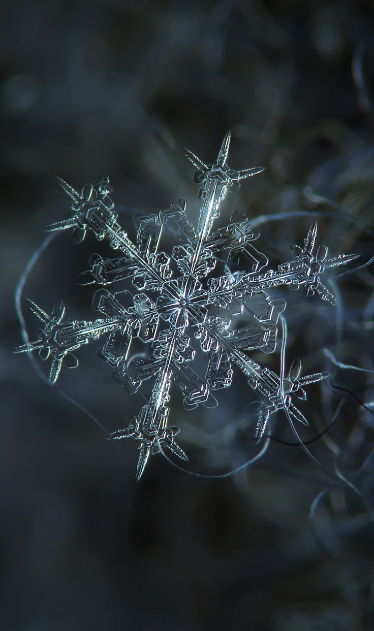 Starlight | Alexey Kljatov |  As fascinating as macro photography is, most of us think we can't do it because it requires specialized equipment. Alexey, however, is an inspiration to aspiring amateur photographers everywhere -he created a home-made rig capable of capturing stunning close-up pictures of snowflakes out of old camera parts, boards, screws and tape. His pictures give us an enchanting close-up view of snowflakes that we could never hope for without specialized equipment.