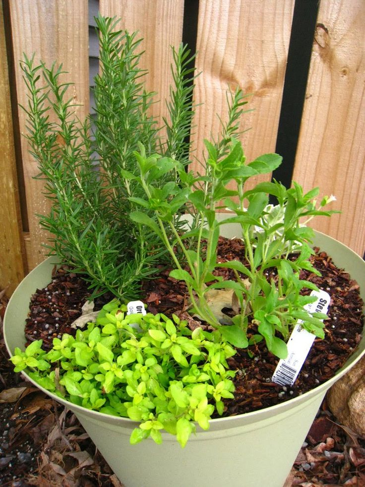 Ten of the best herbs to grow in containers