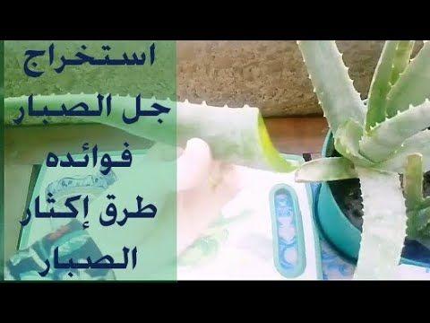 9 جل صبار الألوفيرا وطريقة استخراجه فوائد الألوفيرا طرق إكثار الألوفيرا ج2 Youtube Live Lokai Bracelet Aloe Vera Aloe