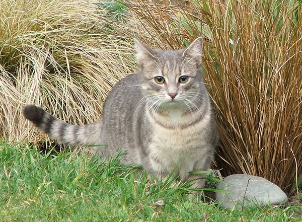 Light Grey Tabby Cat Names