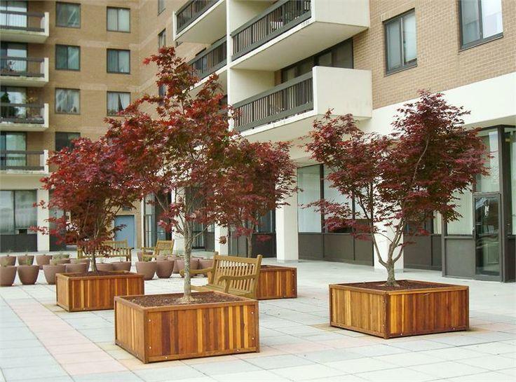 Large Tree Planter Box Exteriors Pinterest Trees