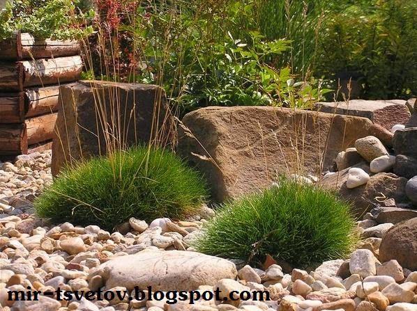 Мир цветов: Ландшафтный дизайн участка: декоративные травы