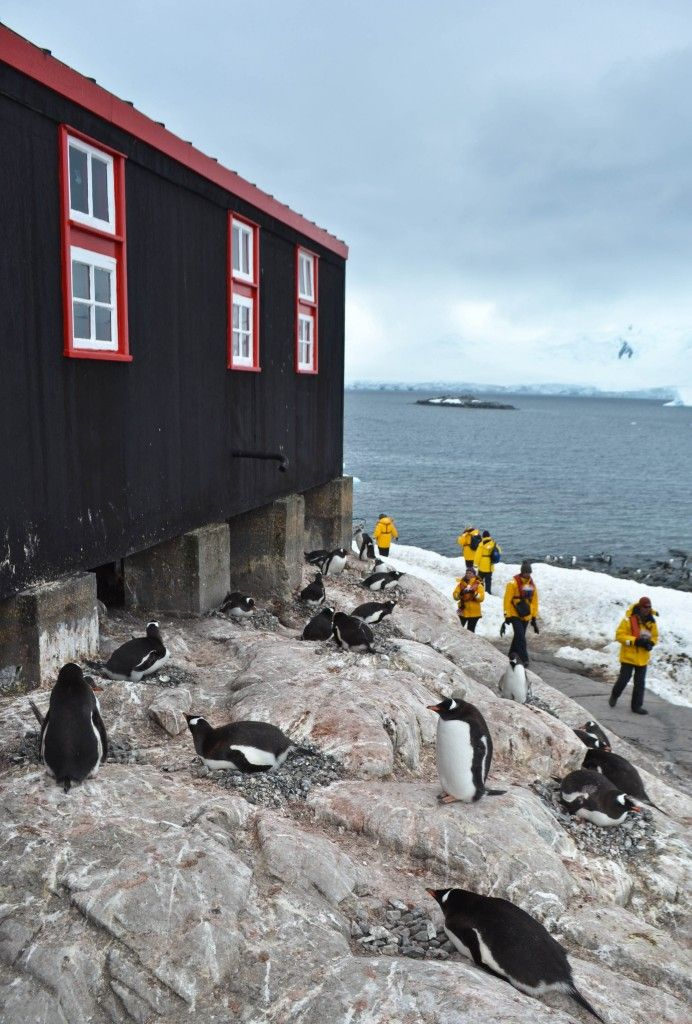 Port Lockroy, Antarctica - Once a British military base and research station, today this remote outpost operates as a post office & museum to Antarctic history