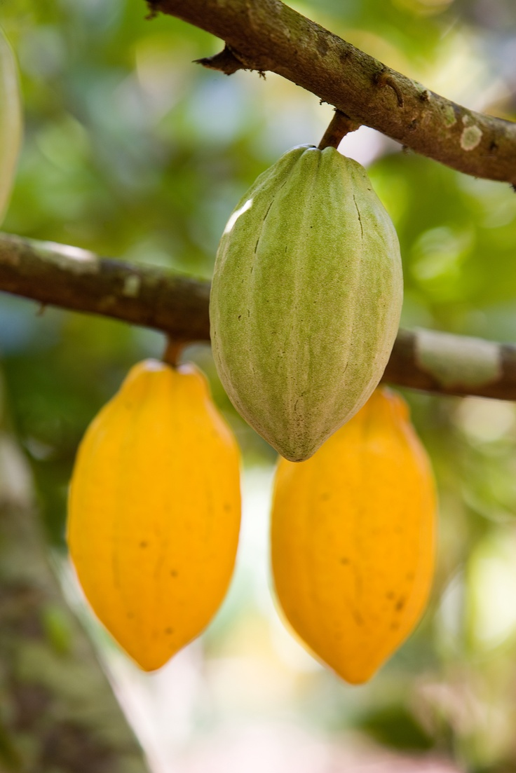 Voi hyvin -hunajasuklaa on valmistettu luomukaakaopavuista, jotka on kasvatettu Dominikaanisessa tasavallassa. Niiden tuotantoketju on jäljitettävissä viljelijään saakka ja tuotanto täyttää vastuullisuuden kriteerit.