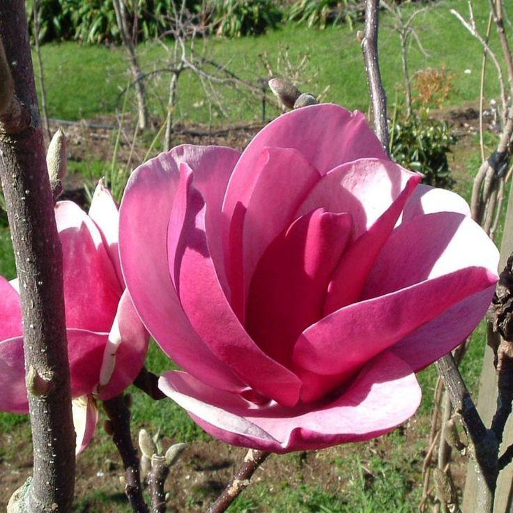 Садовые цветы купить в питомнике минск цветы из ленты купить оптом