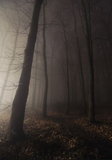 I had a nightmare where she was after me.It was foggy and there was a clearing in the middle of a forest area. I was hiding somewhere  (don't know where), but I was watching her look for me. I was terrified.