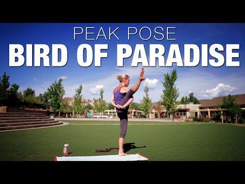 105 best yoga peak poses images on pinterest  yoga poses