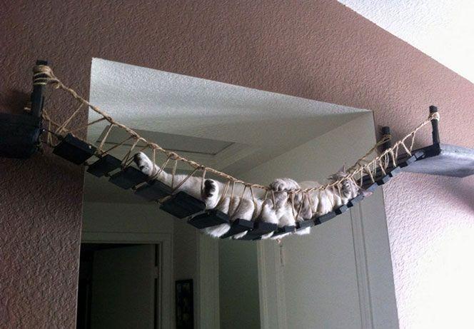 cucce tiragraffi per gatti - Cerca con Google