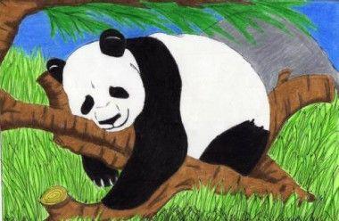 dibujos de osos pandas faciles