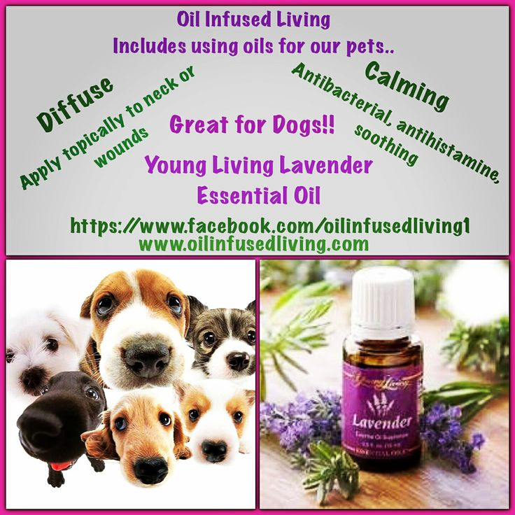 Did you know Lavender Essential Oil is great for dogs too