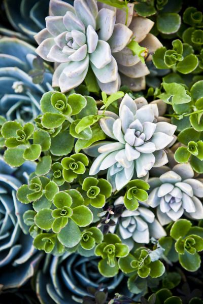 I LOVE these...succulents- grey, green, blue. Going to start myself a succulent garden one day!