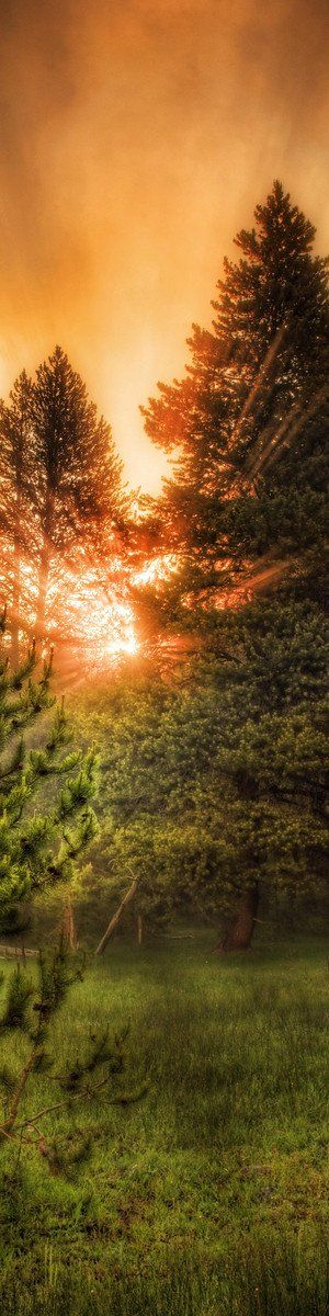 "trees in morning - from the Exhibition: ""Cropped for Pinterest"" - photo"