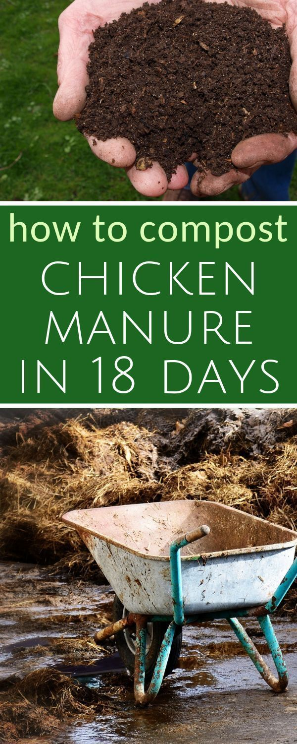 72b0279018e458049bb82167ee3e370d - Is Composted Manure Safe For Vegetable Gardens