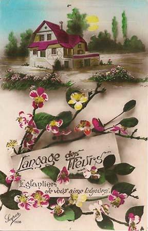 les 76 meilleures images du tableau le langage des fleurs sur