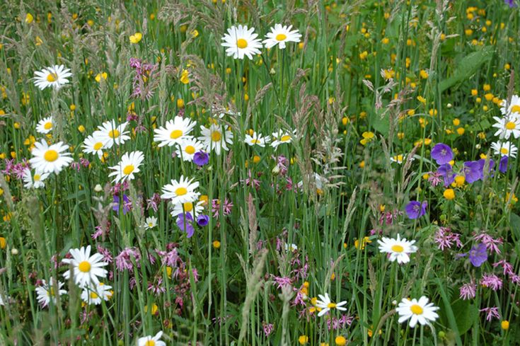 Wildflower turf | Lindum