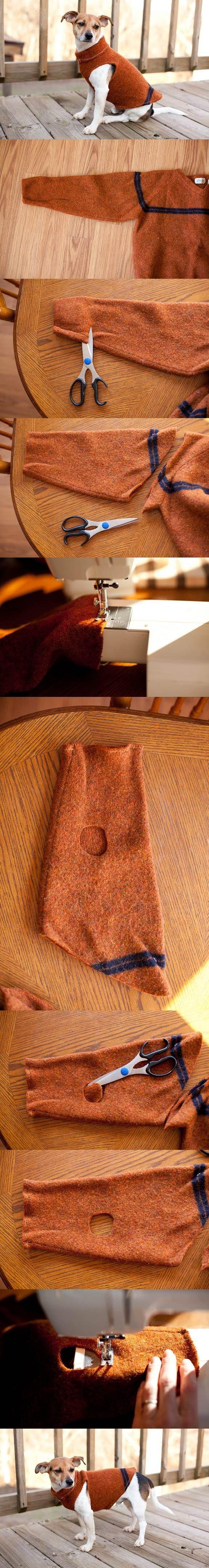 DIY Sweater Sleeve Dog Coat