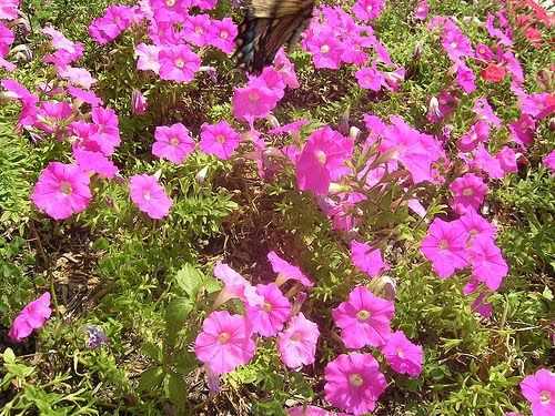 18 best images about zone 8 deer resistant plants for Low maintenance plants for garden borders