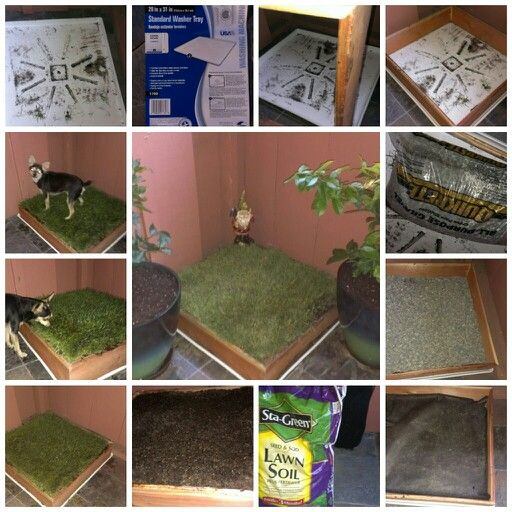 DIY Porch Potty: all materials purchased at Lowes. Total cost $48. Started with tray made for clothes washer. Frame was built from 2 standard cedar fence boards. First we drilled drain holes in the tray. (Mine are drilled down one side to run off my patio into a flowerbed below.) Placed frame on tray, filled with bag of gravel, then I put down a piece of weed blocker felt, one and 1/2 bags of soil for sod/grass, trimmed 1 piece of sod to fit. I sprayed the gnome and grass with potty training…