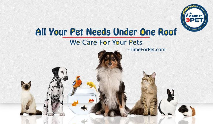 Online pet store for all your pet needs