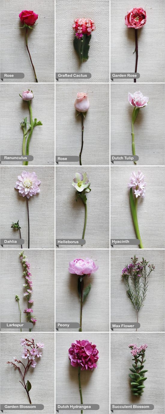 Dahlia, larkspur, Dutch hydrangea, Dutch tulip, garden blossom, garden rose, rose,grafted cactus,helleborus,hyacinth, peony,ranunculus,succulent blossom, and wax flower.
