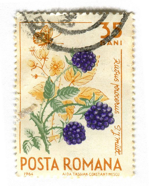 My Dad used to collect stamps. I was getting lost in the album's pages, Gorgeous vintage stamp