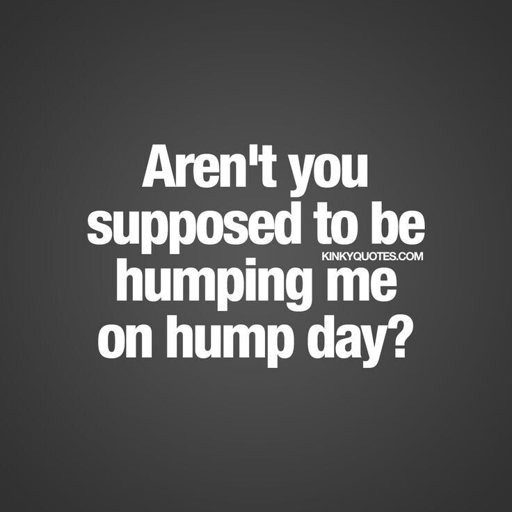 Charming The 57 Best HuMp DaY QUoTeS Images On Pinterest | Hump Day Quotes, Camel  And Camels