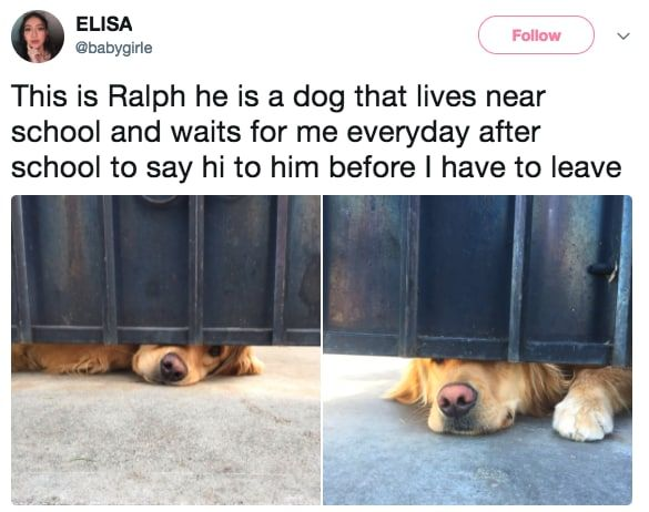 22 Dogs That Have Their Shit Way More Together Than You Do Dogs Funny Animals Best Dogs