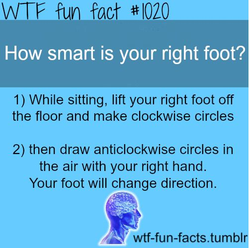 20 best images about Interesting Facts on Pinterest | Funny weird ...