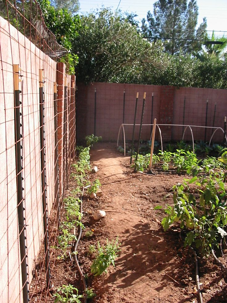 1000 Images About Sunken Veggie Beds On Pinterest