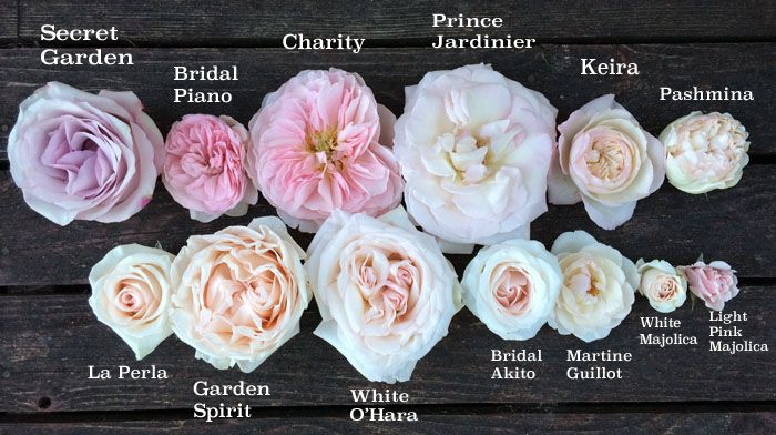 "Roses, all about roses.  FlirtyFleurs did a ""The Blush Pink Rose Study"" and pictured/described the roses.  Simply beautiful. I can only imagine how amazing their studio smelled!"