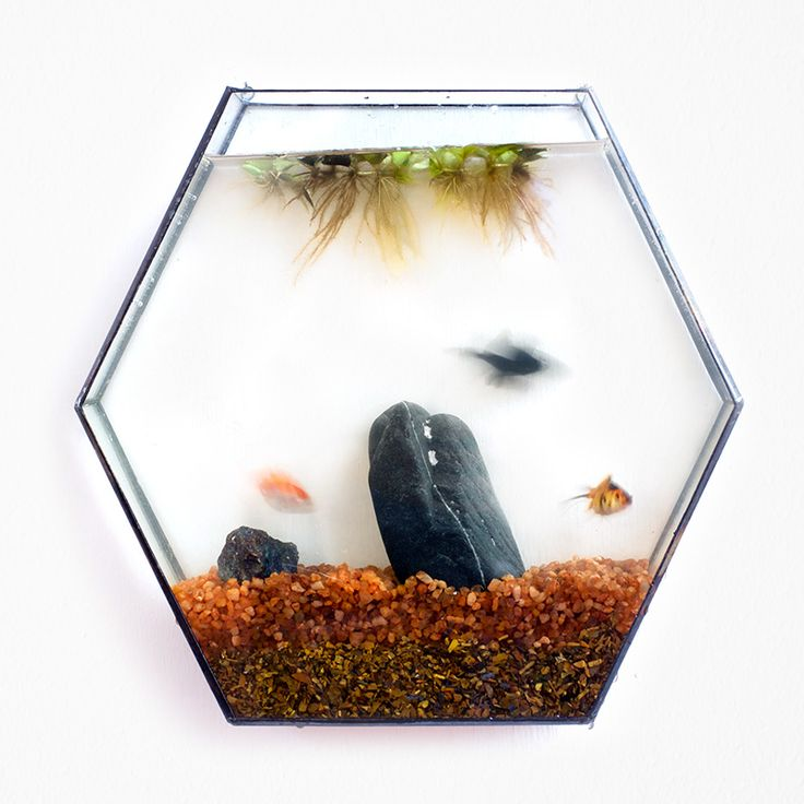 Hexagonal wall terrarium.