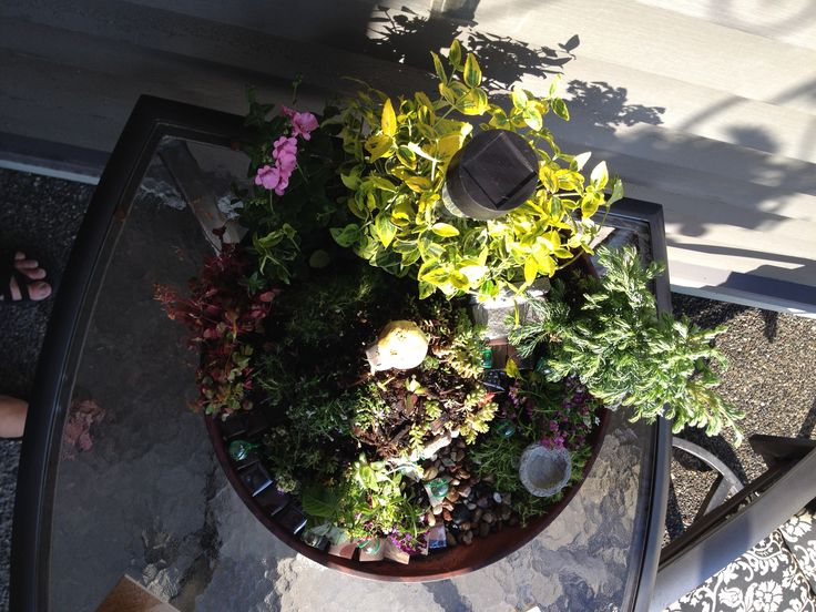 Gnome of Ensley Hill -- overhead view of garden.