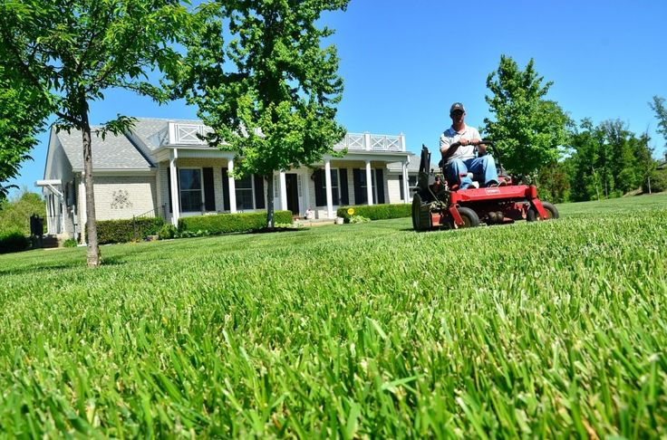Caring for Your Lawn: coolabahturf