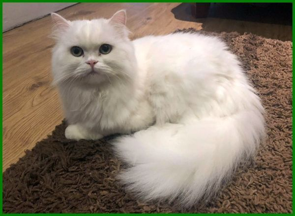 Daftar Terbaru 27 Nama Kucing Betina Islami Terbaik Daftarhewan Com Di 2020 Kucing Betina Kucing Hewan Peliharaan