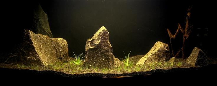 Sarab \ Paisajismo acuático: Estilo oriental. 100l. En sus comienzos
