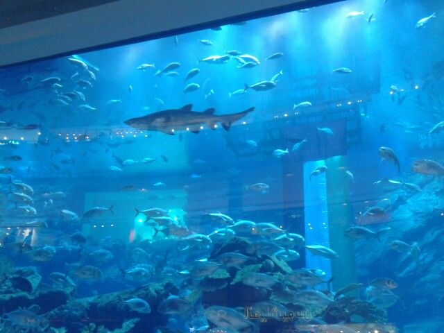 Finding Nemo...in Dubai Mall